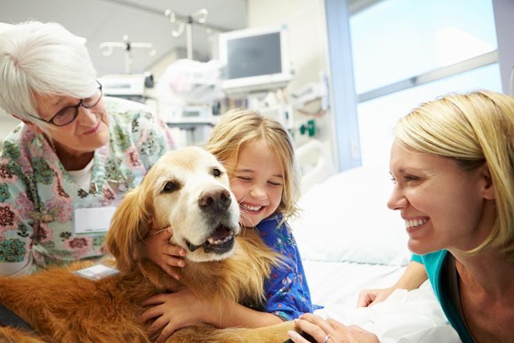 Demostrado-la-terapia-con-perros-reduce-el-dolor-y-la-ansiedad-en-ninos-hospitalizados-1