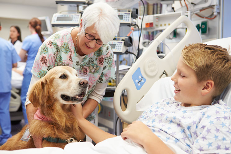 'Demostrado! La terapia con perros reduce el dolor y la ansiedad en niños hospitalizados