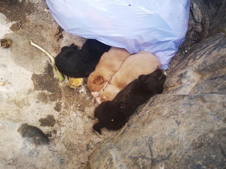 """¡Hay 4 cachorros en la basura! La historia real de """"Los 4 Guerreros"""""""