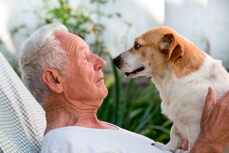 Investigación: los perros han desarrollado musculatura en el ojo para inspirar ternura en los humanos