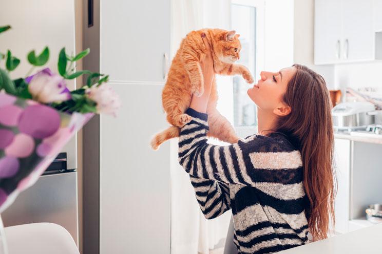 5 trucos que puedes enseñar a tu gato ¡Descúbrelos!