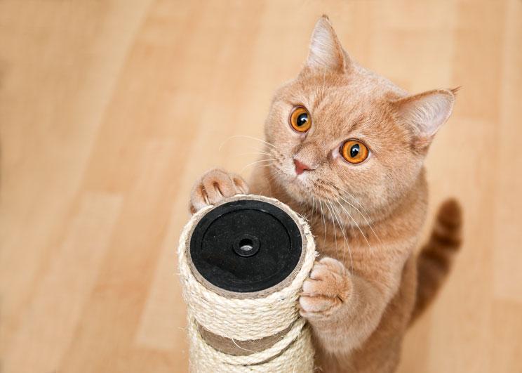 7 consejos para que tu gato se quede solo y tranquilo en casa
