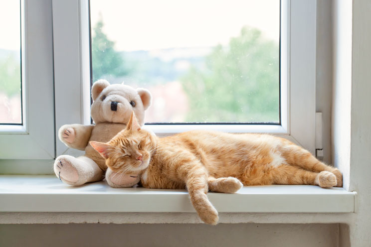 7-consejos-para-que-tu-gato-se-quede-solo-y-tranquilo-en-casa-4
