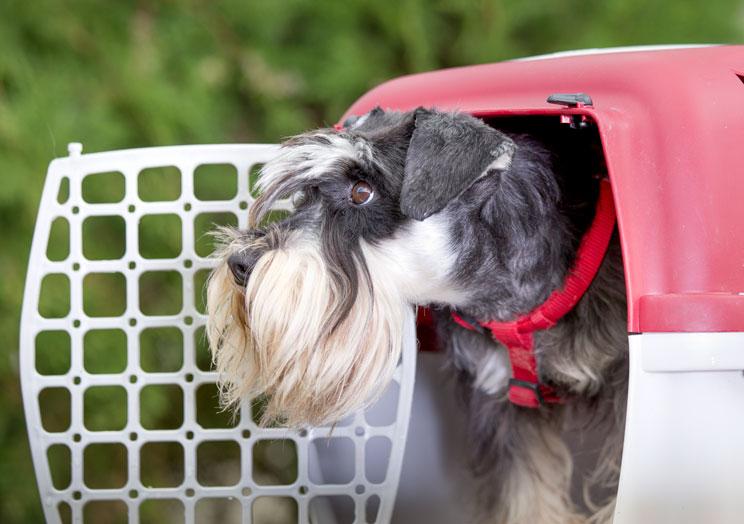 Tutorial de adiestramiento: Cómo enseñar a un perro a estar tranquilo en el transportín