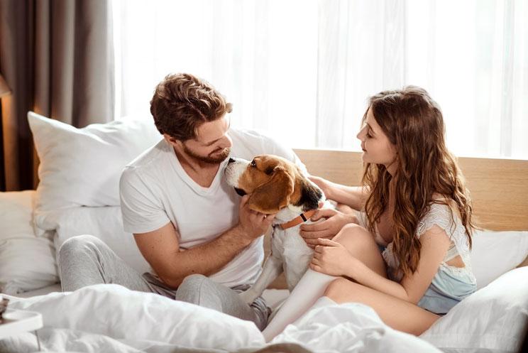 ¿Debe estar nuestro perro en la habitación cuando practicamos sexo con nuestra pareja?