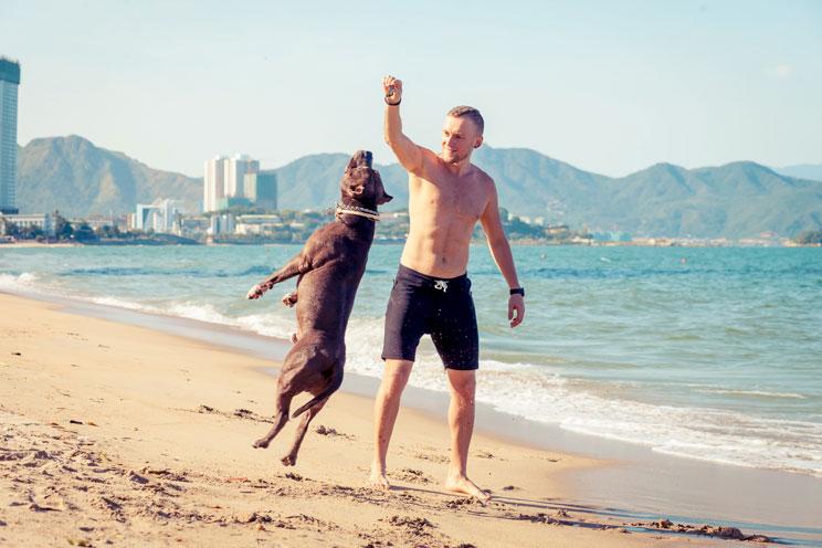 Guía completa de las razas de perros: Pit Bull Terrier Americano