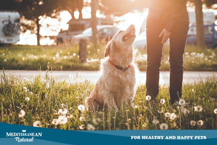¿Por qué mi perro se tumba al sol aunque haga mucho calor?