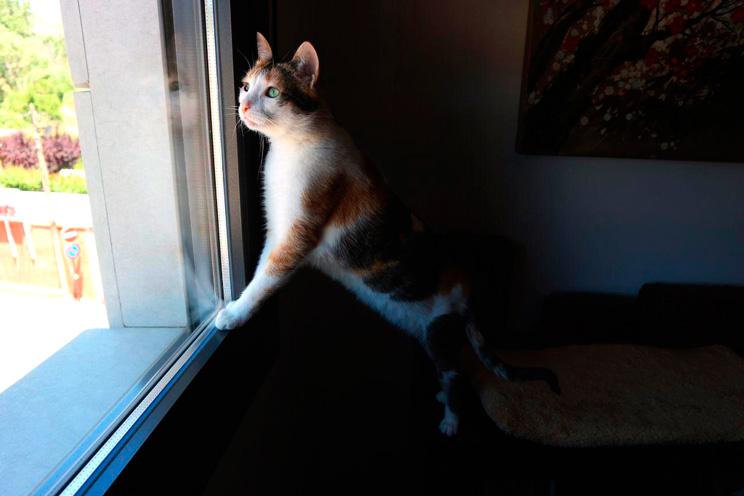 Síndrome del gato paracaidista: Qué es y cómo proteger a tu gato