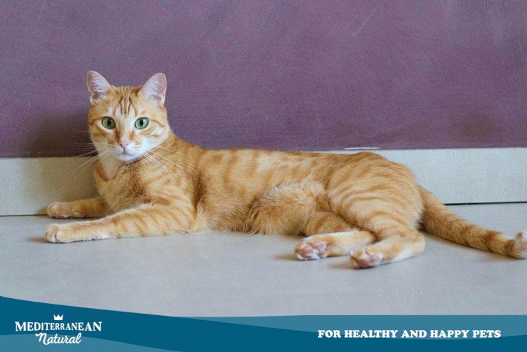 4 características muy curiosas que son comunes en los gatos naranjas