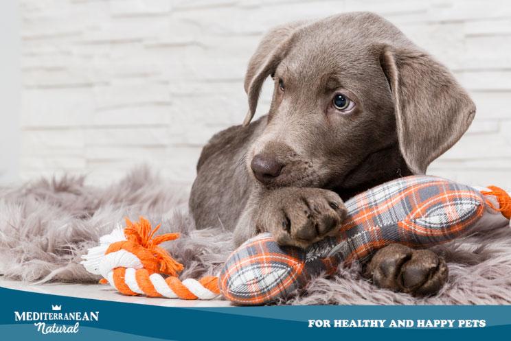 5 razones por las que un perro rasca por toda la casa