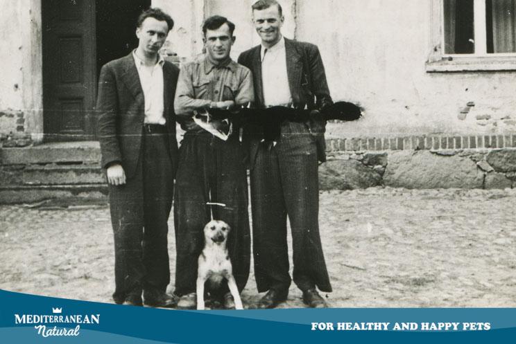 El perro, presente en los mayores hitos de la historia de la humanidad