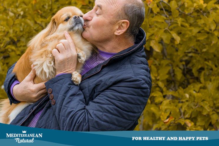 Guía completa de las razas de perros: Pekinés