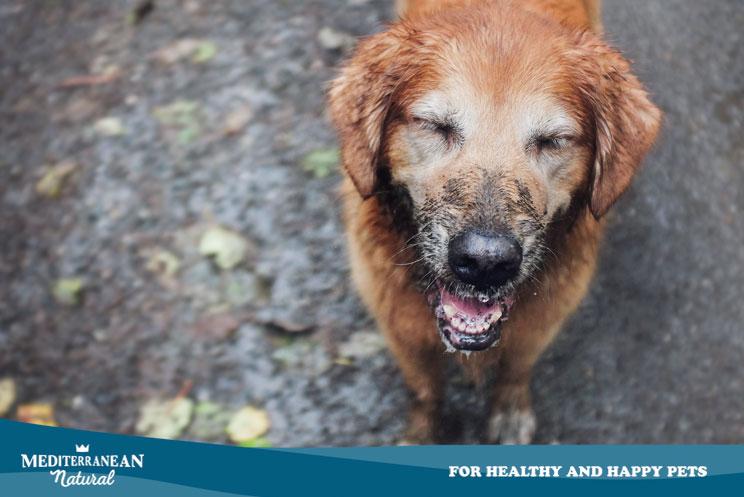 ¿Qué hacer si mi perro no quiere pasear cuando llueve?