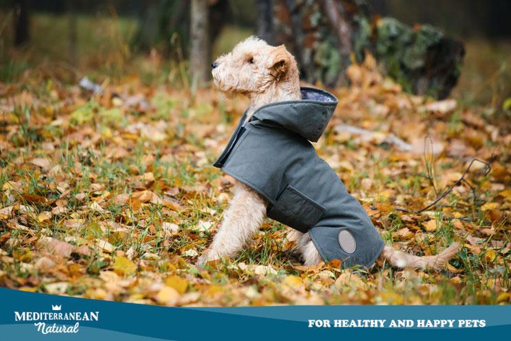 Que-hacer-si-mi-perro-no-quiere-pasear-cuando-llueve-4