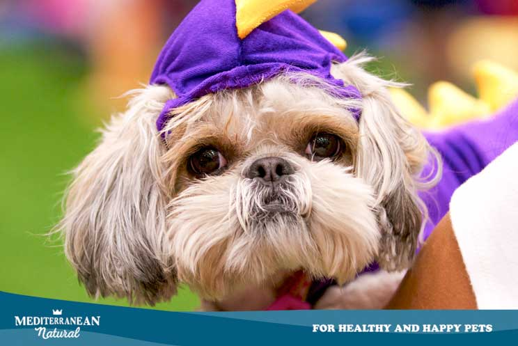 Disfrazar a un perro ¿podemos hacerlo o debemos evitarlo?