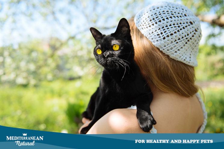 Gatos negros: por qué es difícil adoptarlos en octubre y otras curiosidades