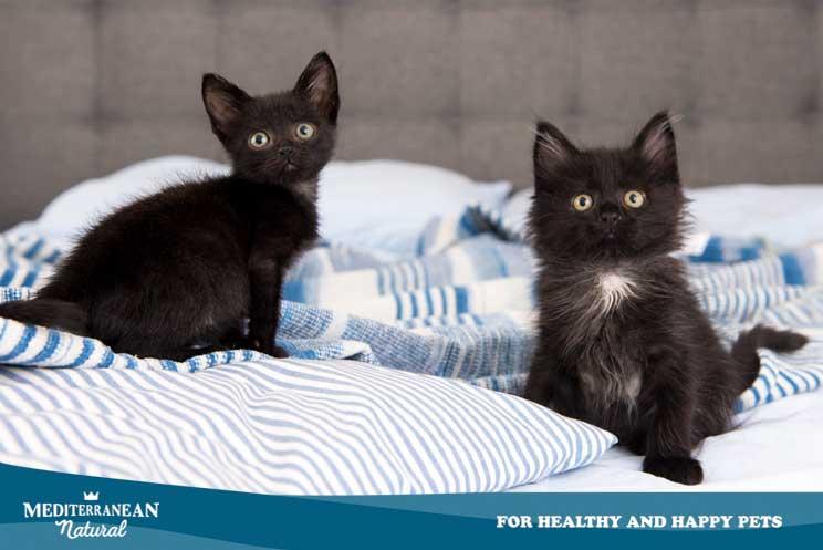 Gatos-negros-por-que-es-dificil-adoptarlos-en-octubre-y-otras-curiosidades-4