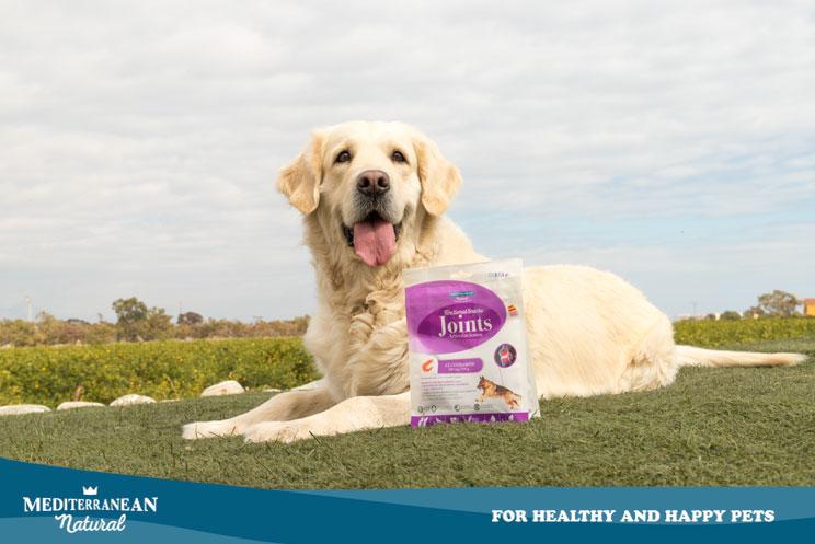 Snacks naturales para perros fabricados en España