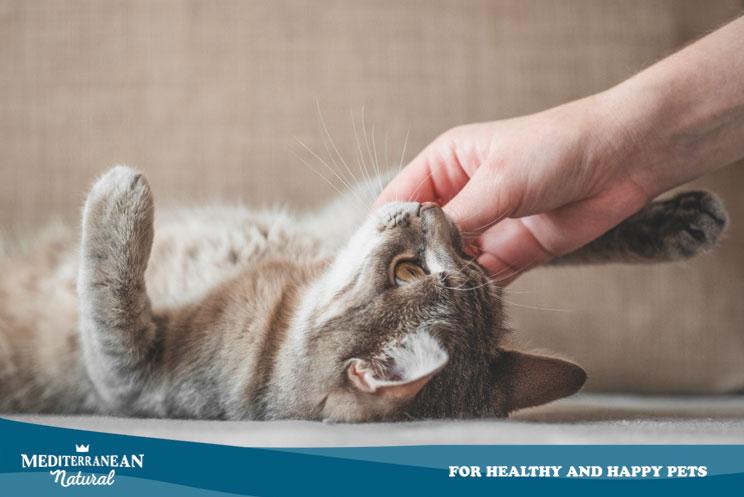 Agresividad en el juego: mi gato me muerde manos y pies