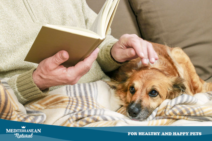 Investigación: Tener perro mejora tu salud cardiovascular