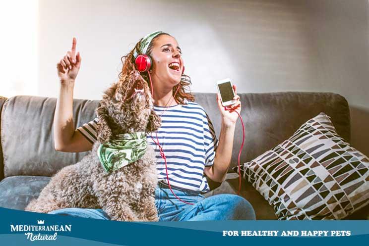Música para perros: Crea una playlist con Spotify en función de su personalidad