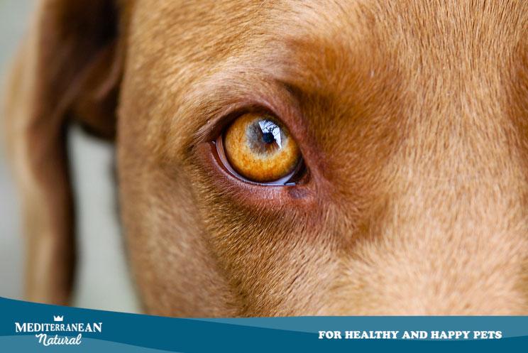 El gusano Thelazia amenaza los ojos de tu mascota: descubre qué es y cuáles son sus síntomas