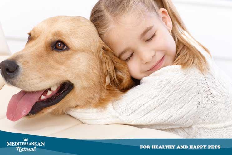 Investigación: el cáncer en perros usado como modelo para el estudio de cáncer en humanos