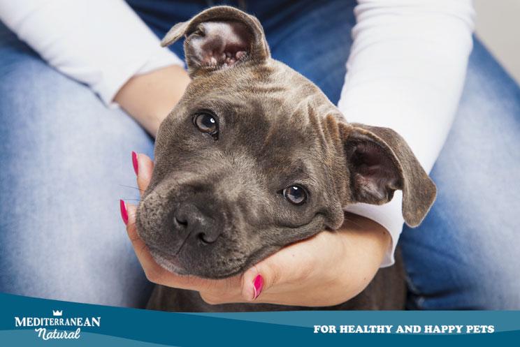 ¿Qué coberturas podemos encontrar en los seguros para animales? ¿Qué seguro elegir?