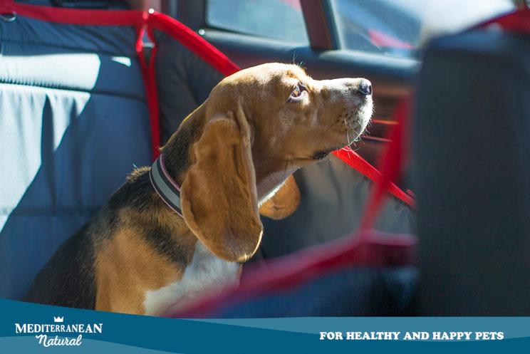 Taxiguau: la app para coger un taxi con tu perro en la ciudad