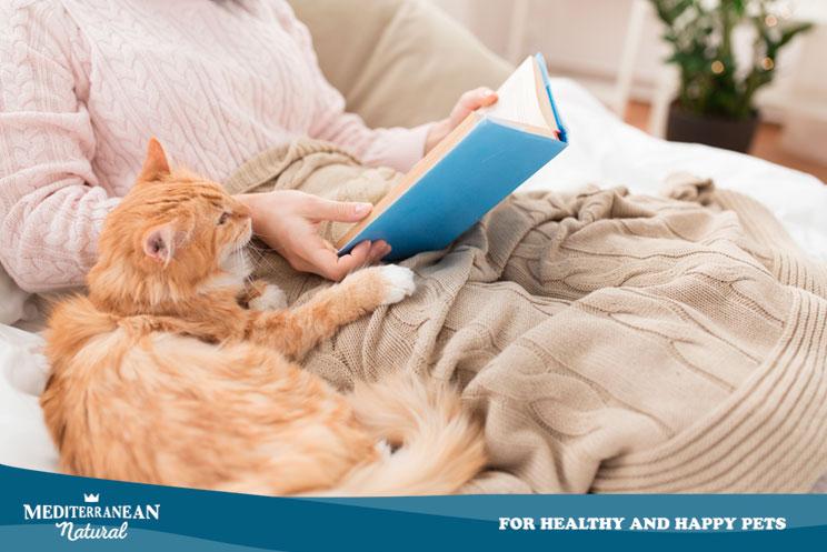 5 libros recomendados para los que amamos a los gatos