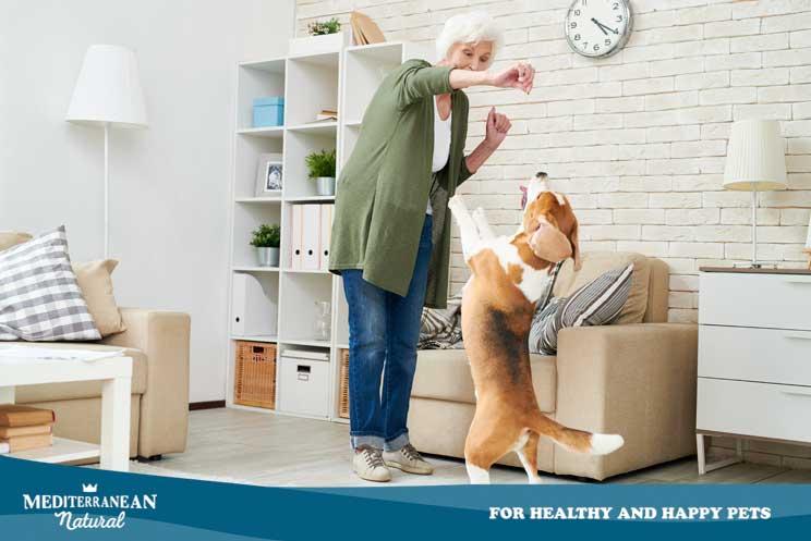 Beneficios de la musicoterapia en perros: Cómo practicarla en casa