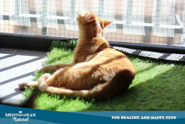 7 consejos para ayudar a tu gato a llevar mejor el confinamiento