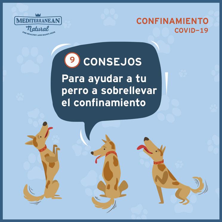 9 consejos para ayudar a tu perro a sobrellevar el confinamiento