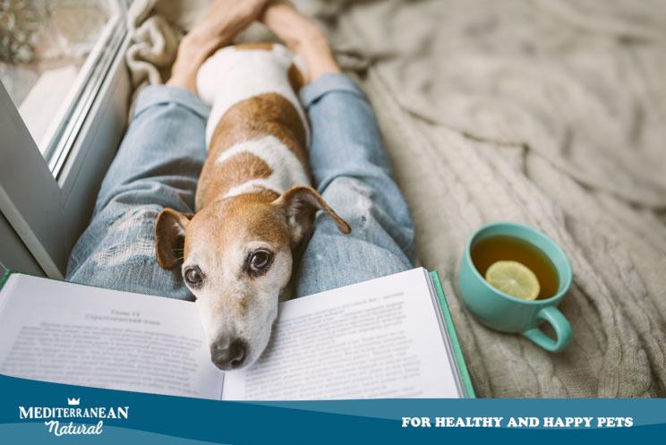 Día del Libro 2020: Propuestas lectoras para amantes de perros y gatos