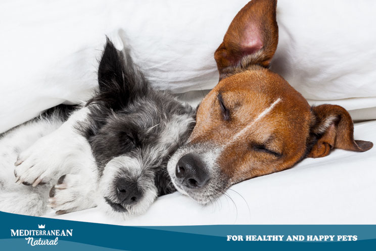El sueño en los perros ¿Cuánto tiempo duermen? ¿Cómo ayudar a un perro a descansar mejor?