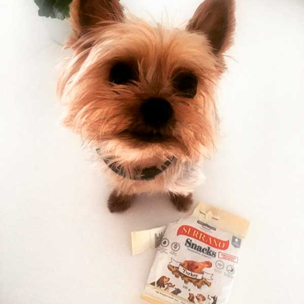 Pippa the yorkies y Serrano Snacks de pavo