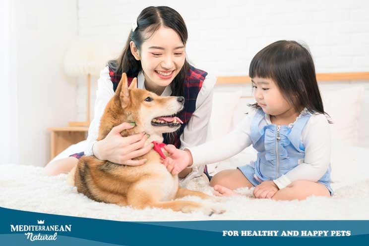 ¡Por fin! China no podrá criar perros y gatos para el consumo humano