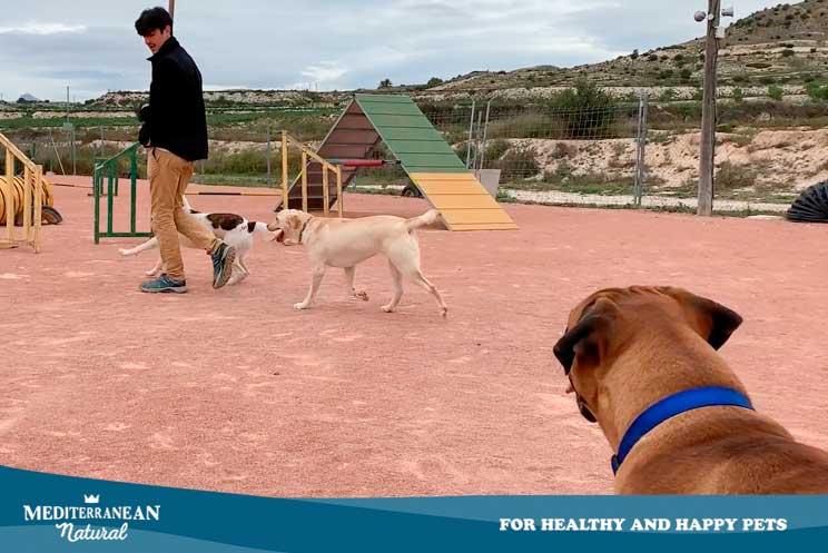 Tutorial de adiestramiento: Cómo enseñar a un perro a que nos siga sin correa