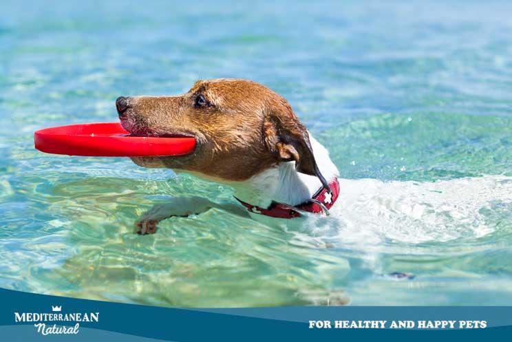Cómo prevenir los golpes de calor en perros