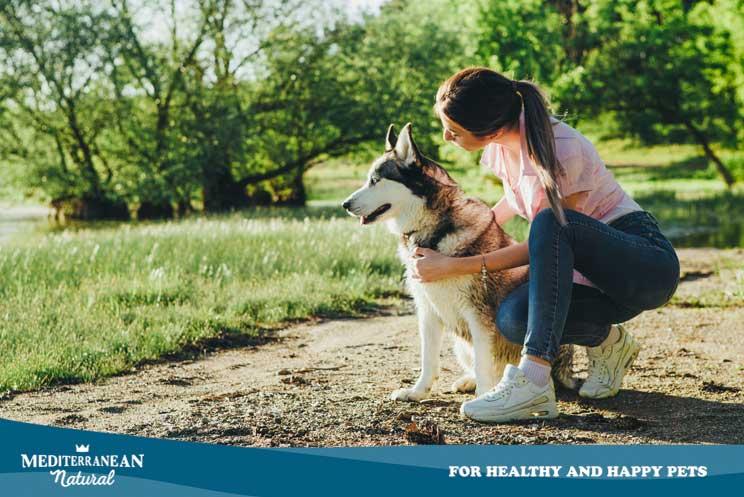 Coprofagia: ¿Por qué mi perro se come las cacas?