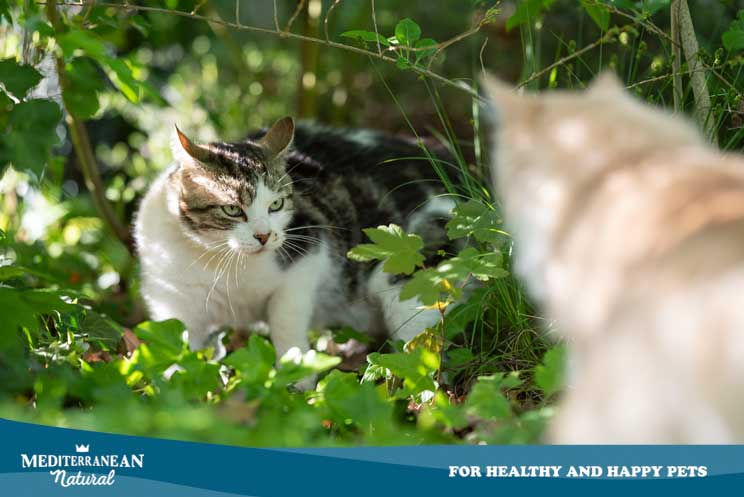 Métodos anticonceptivos para gatos