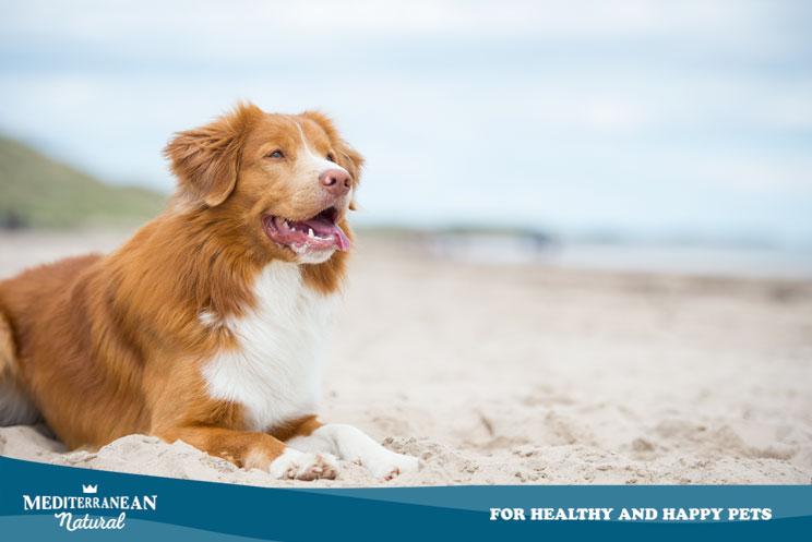 Protege a tu perro del sol en verano: su salud lo agradecerá