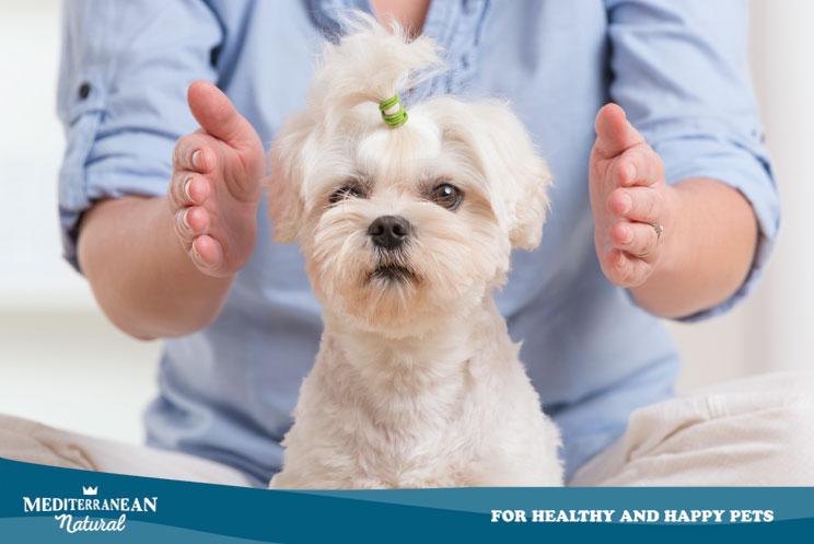 Reiki con perros ¿En qué consiste? ¿Cuáles son sus beneficios?