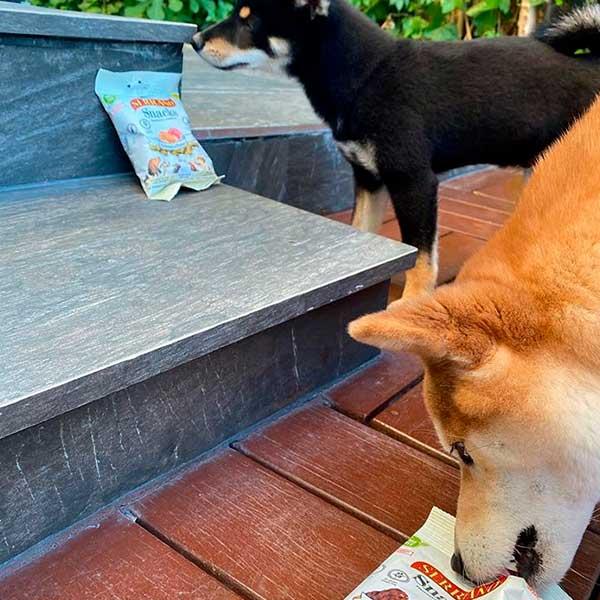 Spanish Shibas comiendo serrano snacks para perros de Mediterranean Natural