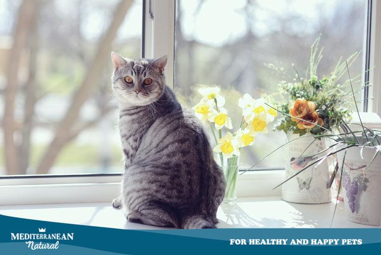 ¿Es bueno dejar salir a mi gato fuera de casa? Ventajas e inconvenientes