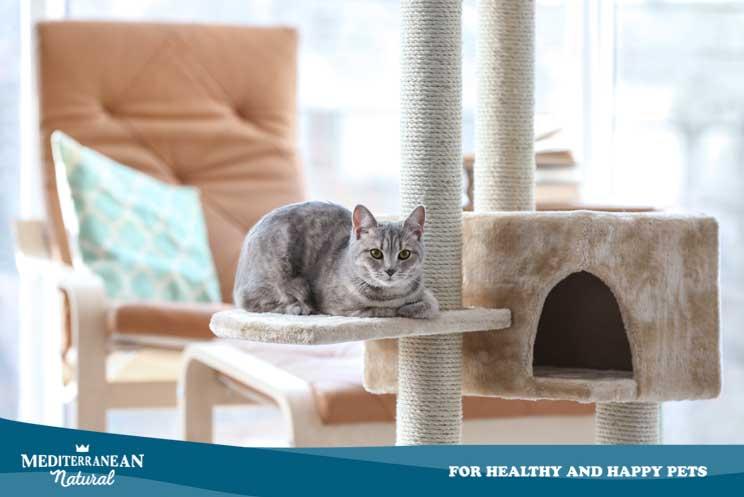 Gatos con artrosis: síntomas, diagnóstico, cuidados y tratamiento