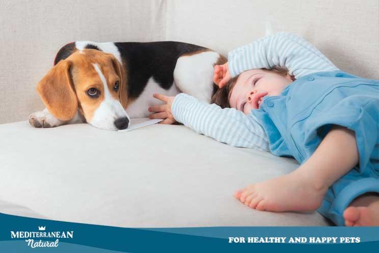 Perros de alerta médica ¿Cómo trabajan? ¿Qué son capaces de detectar?
