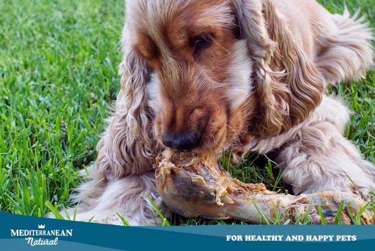 El colágeno para perros: ¿Cuáles son sus beneficios y cómo administrarlo?