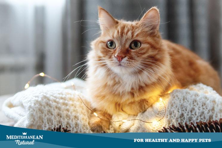 Decoración de Navidad segura para casas con gato