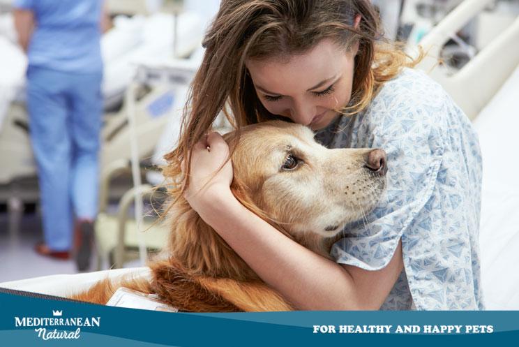 Perros de intervenciones asistidas ¿Cómo aprenden? ¿Cómo ayudan en una terapia?